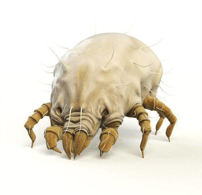 Un materasso contro gli acari e le allergie